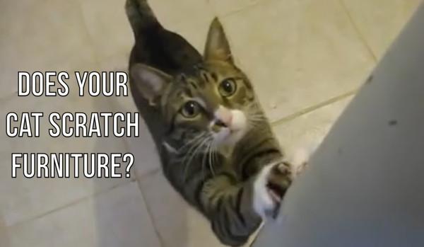 家具で爪を研ぐ猫