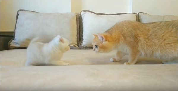 子猫と茶虎猫