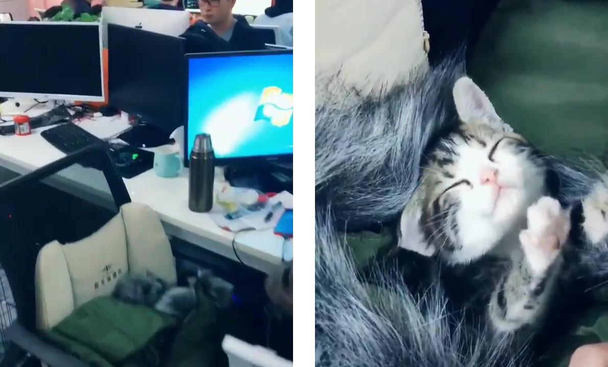 猫と同伴出勤