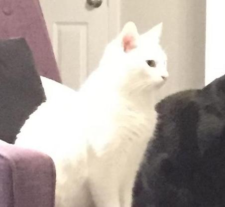ヒレがある白猫