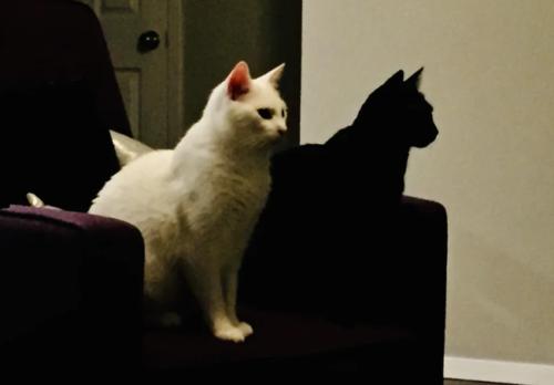 影のように見える黒猫