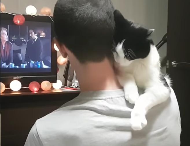 パパに抱っこされた時の猫