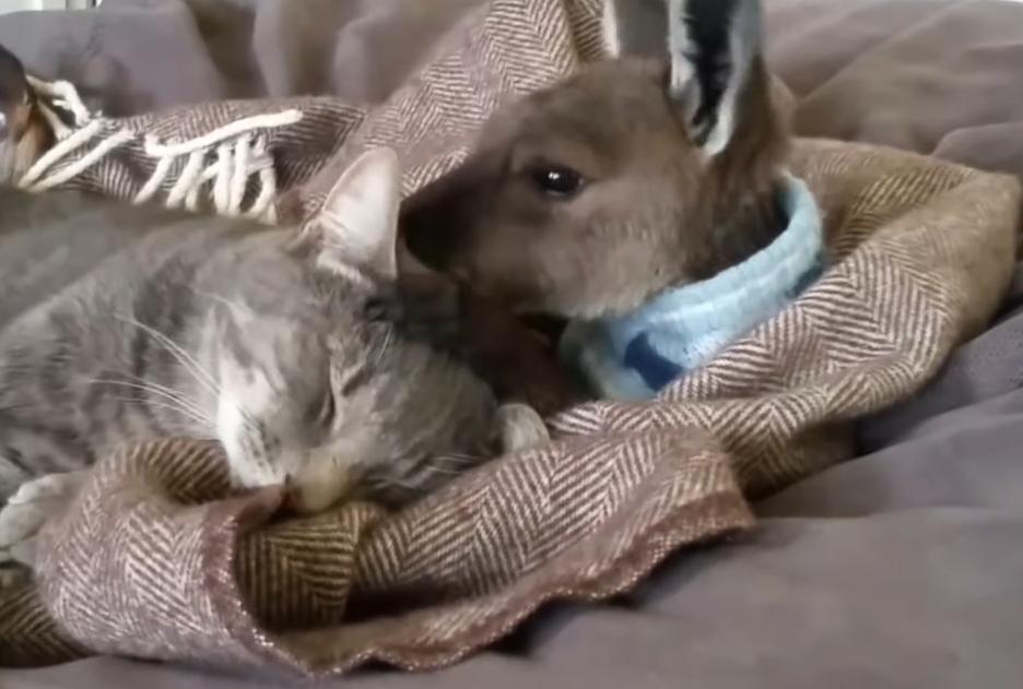 猫とカンガルー