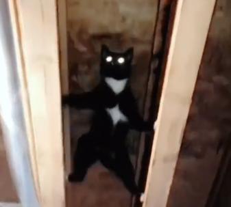 梁を渡る猫