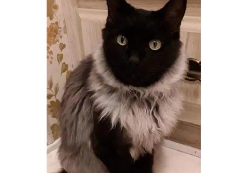 毛皮を着たような柄の猫