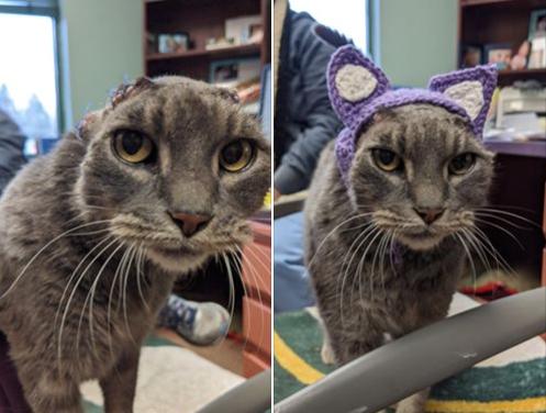 編み物でできた猫耳をつける猫