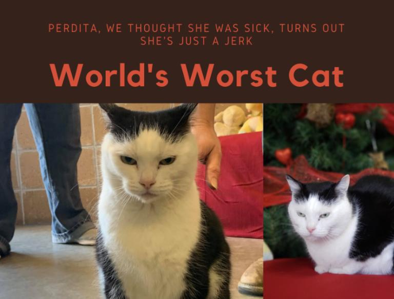 最悪な猫として紹介された猫パディータ