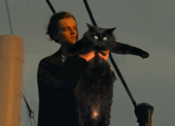 タイタニック猫