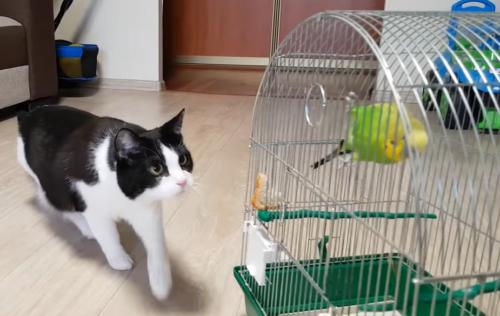 鳥を見つめる猫