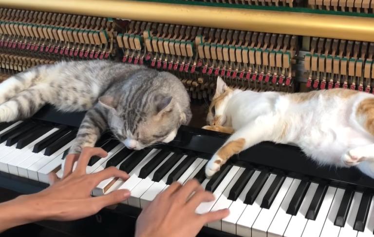 ピアノの鍵盤の上で寝る2匹の猫