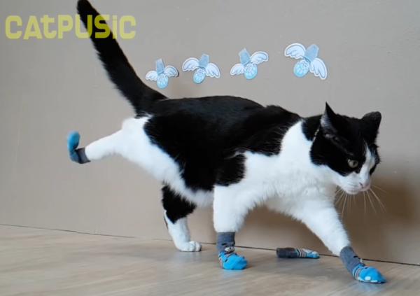 後ろ足の靴下を脱ぐ猫