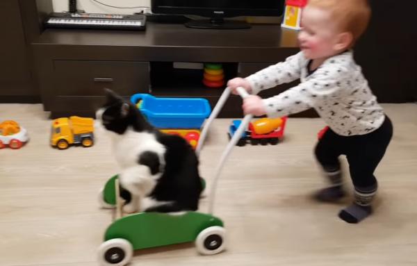 手押し車でスリルを感じる猫