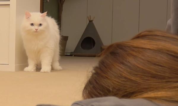倒れた飼い主と猫