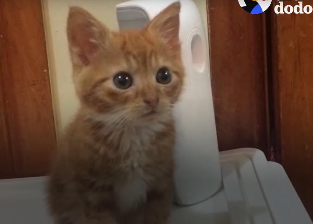 ひときわ小さな子猫