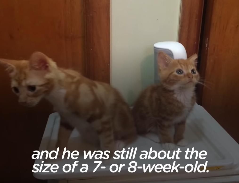 兄弟と小人症の猫