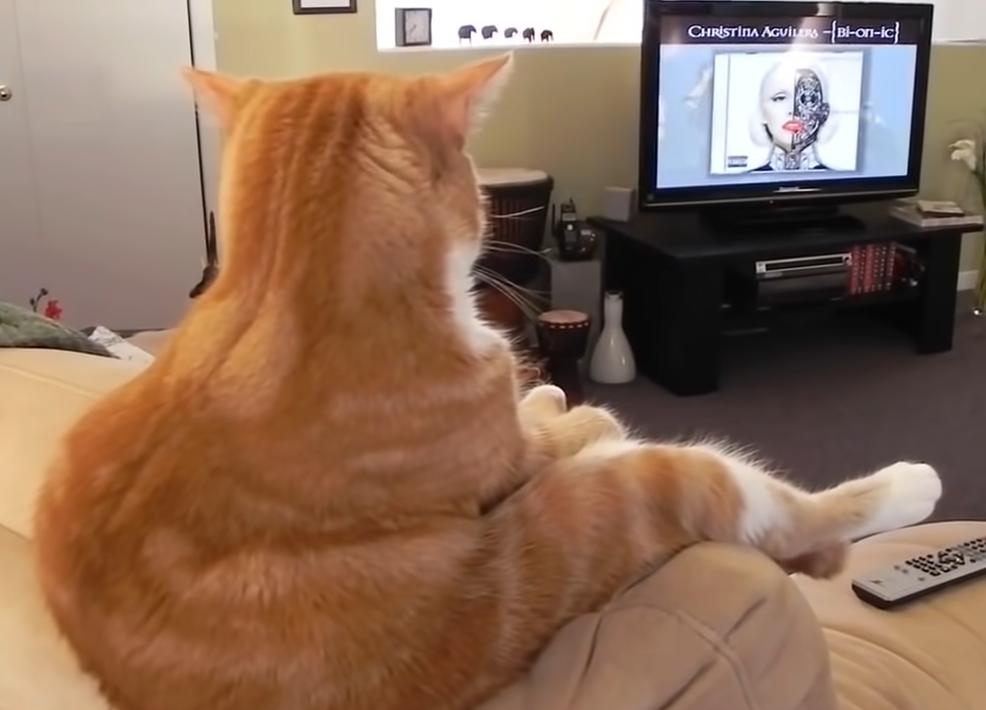 ソファーに座る猫