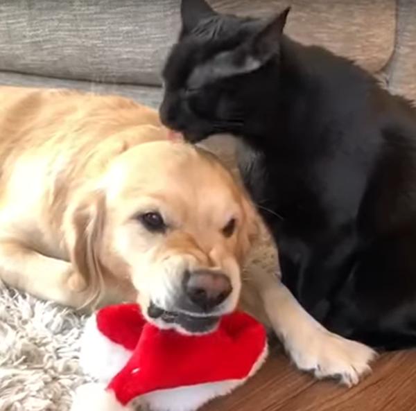 犬に毛づくろいをする猫