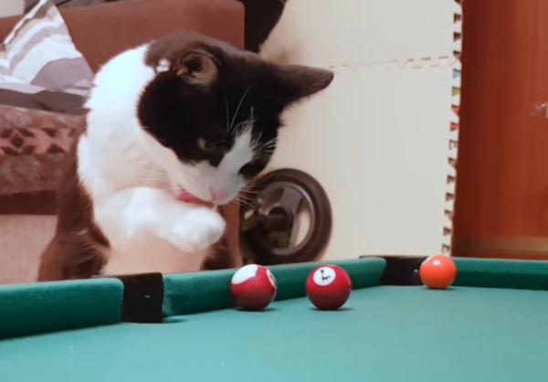 手をなめる猫