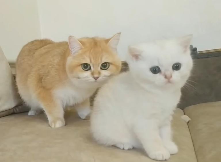 白い子猫と茶色の猫