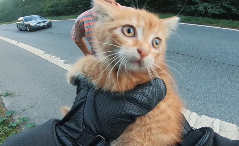 道路で救出された猫