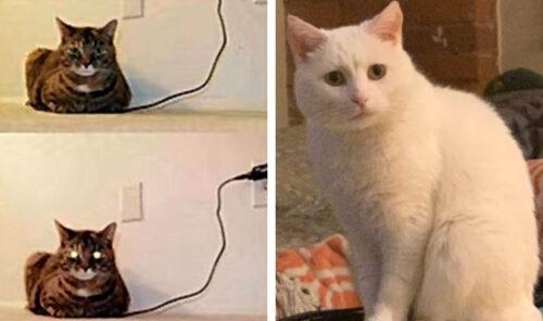 表情豊かな猫