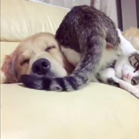 犬にお尻でスリスリする猫