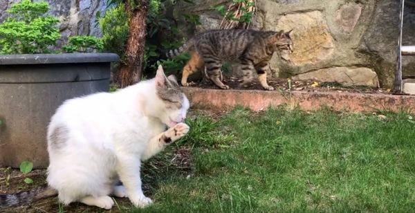 食後の猫たち
