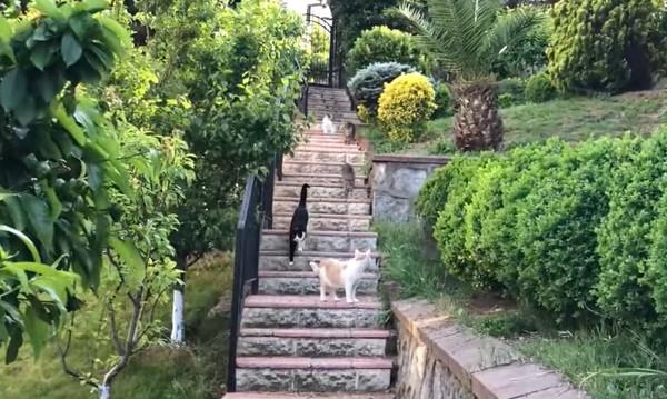玄関までついてくる猫たち