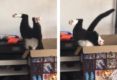 逆さまになった猫