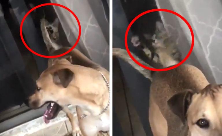 犬の尻尾を狙う猫
