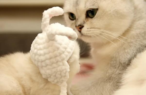 ウサギのコスプレをした子猫を見守る母猫