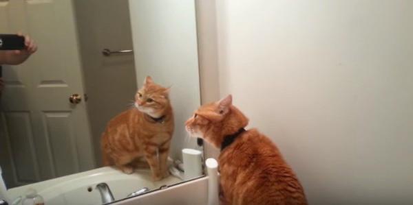 恐る恐る確かめる猫