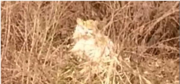 茂みの中で暮らす猫
