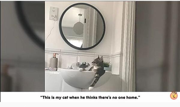 洗面所でリラックスする猫
