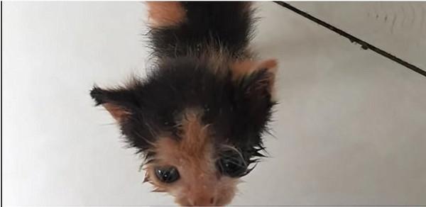 とても小さな子猫