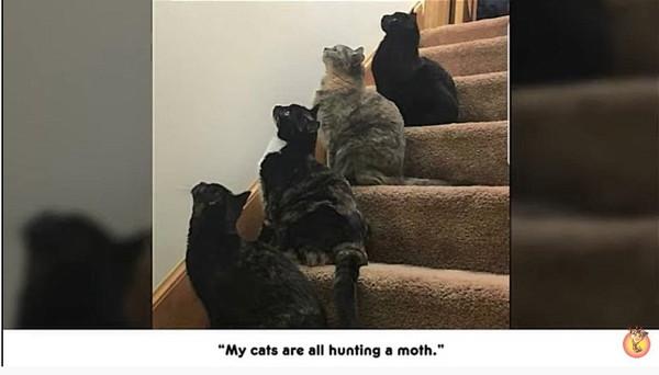 階段で整列する猫たち
