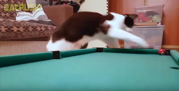 ジャンプで入れる猫