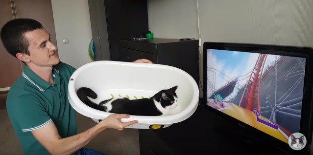 ジェットコースターごっこをする猫