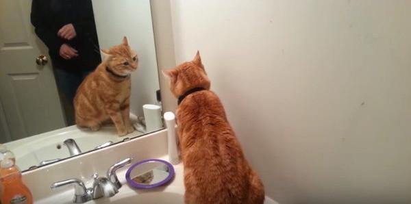 鏡に映った自分を見る猫
