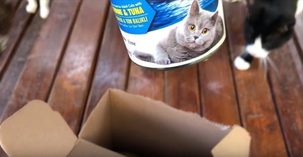 箱から取り出した猫缶