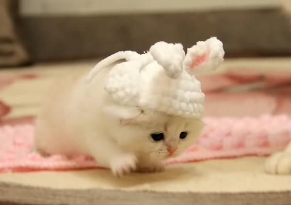 ウサギのコスプレで歩く子猫
