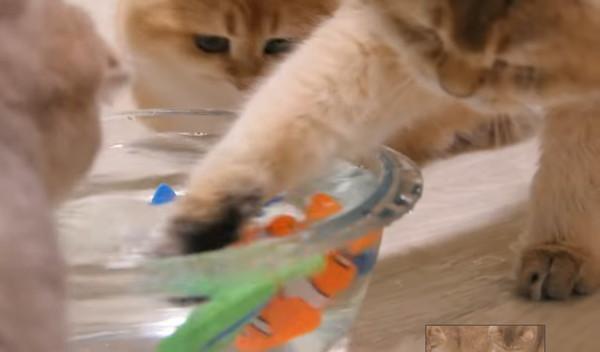 魚のおもちゃを掴む猫