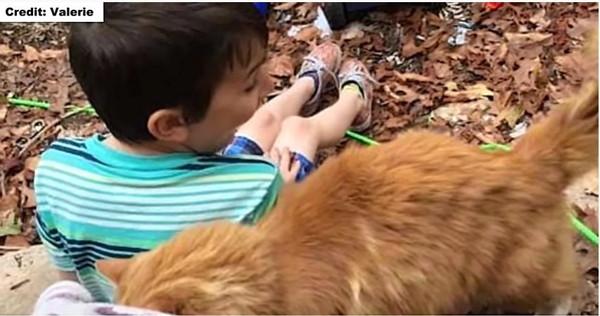 見知らぬ猫と男の子