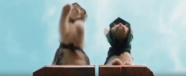 飛び移る猫