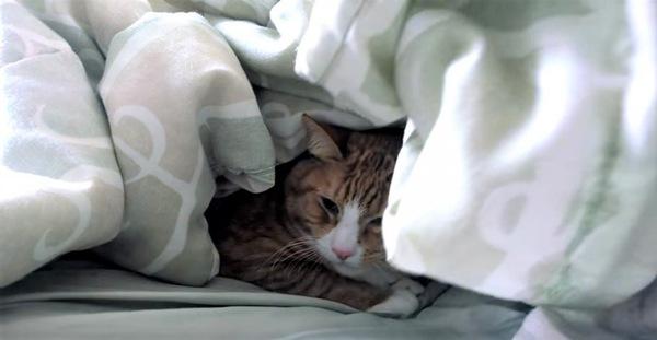 飼い主から開放された猫