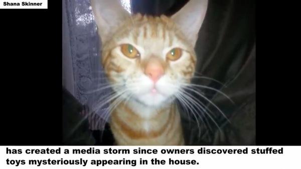 無垢な猫ムファサ