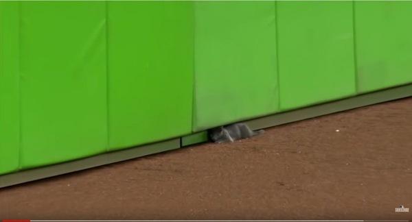 壁の下にうずくまる猫