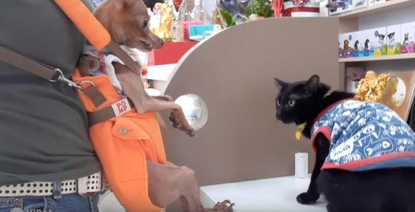 猫とミニチュアピンシャー