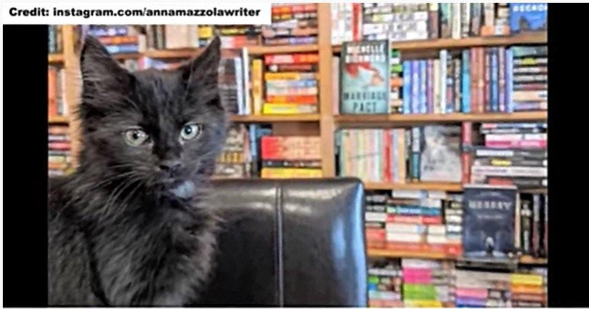 本屋にいる猫