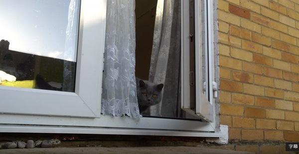 窓から外を見るブルーの猫